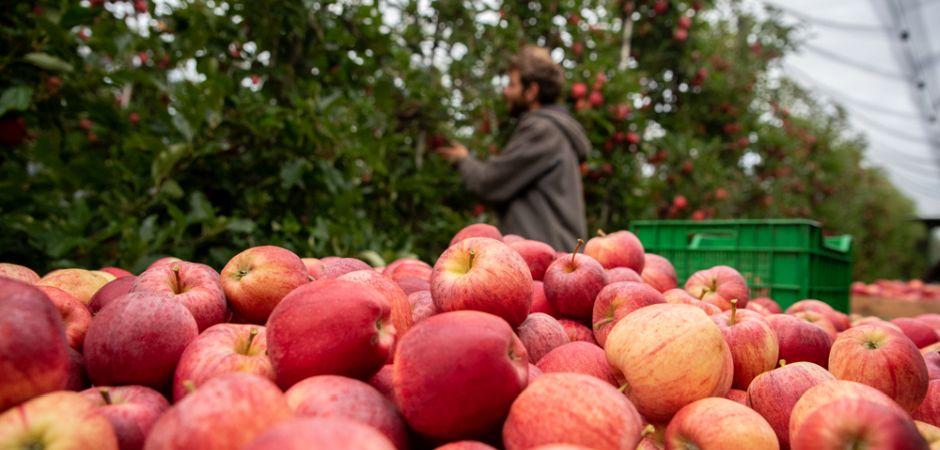 Bild1-Apfelernte-Fahr