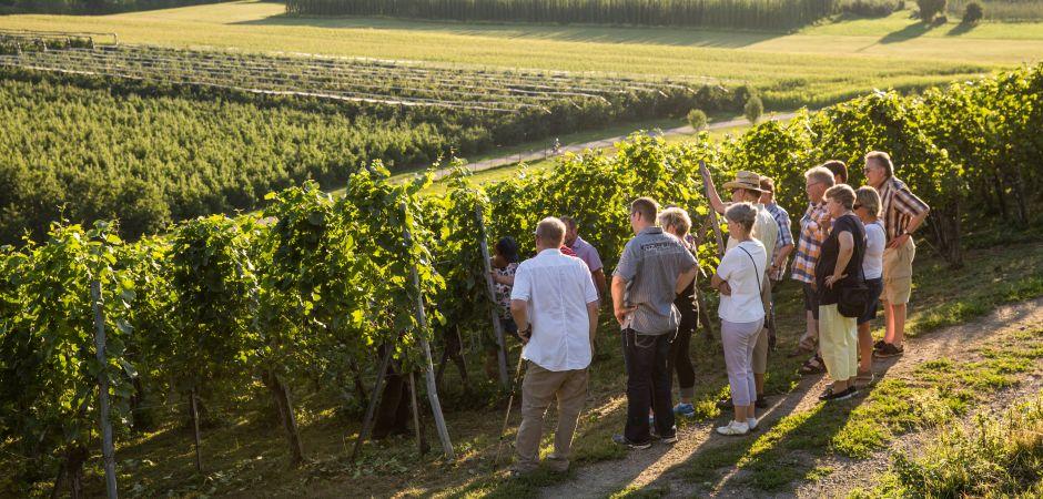 Rottmar-Weinbaubesichtigung