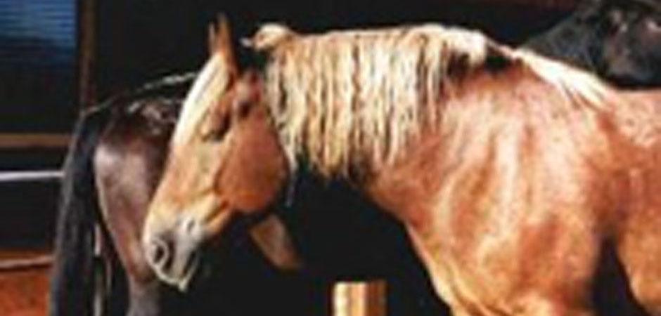 hof-fehrenberg-pferd