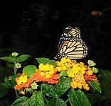 Veranstaltung-Schmetterling-Mainau