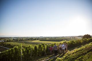 Weinbau_Rottmer