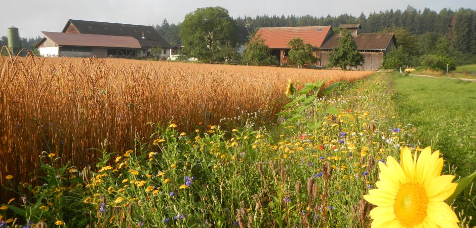 Hof mit Getreidefeld-Internet