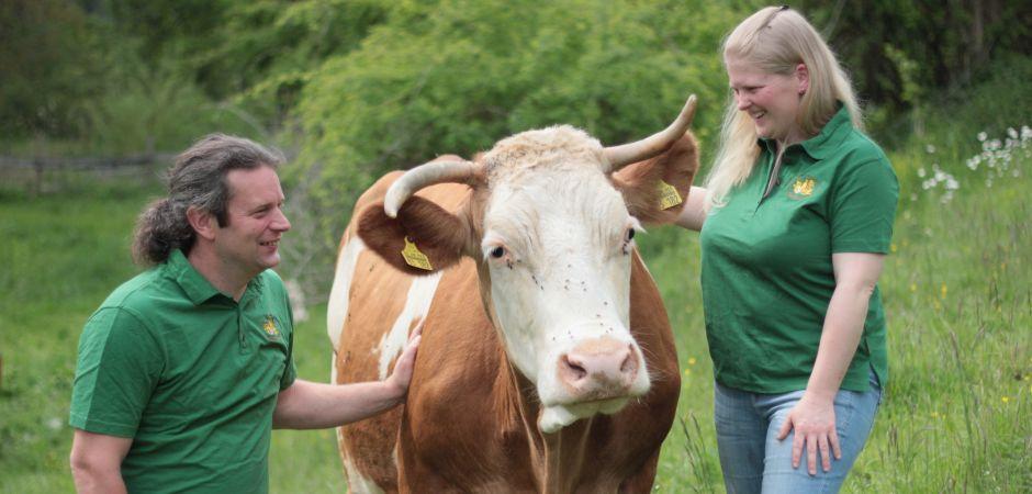 Kuh auf Weide-Internet